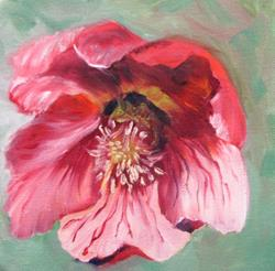Art: Hellebores by Artist Barbara Haviland