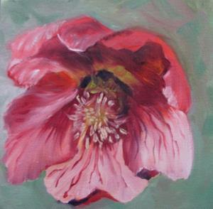 Detail Image for art Hellebores