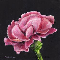 Art: Pink Caranation by Artist Janet M Graham