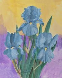 Art: Three Blue Iris by Artist Carol Thompson