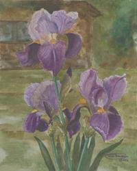Art: Triple Iris Blooms by Artist Carol Thompson