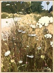 Art: Prairie Lace by Artist Patricia  Lee Christensen