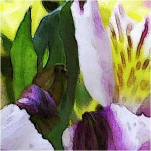 Detail Image for art Pair of Colorful Orchids