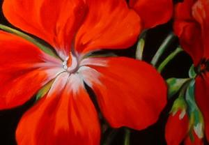 Detail Image for art Red Geranium No.8