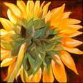 Art: TUSCANY SUNFLOWER BACK by Artist Marcia Baldwin