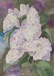 Art: White Lilac by Artist Carol Thompson