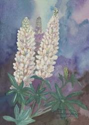Art: White Lupine by Artist Carol Thompson