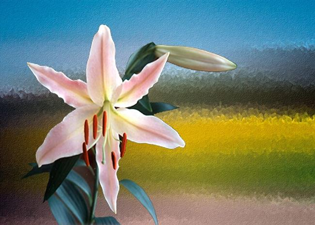 Art: Lily by Artist Deanne Flouton