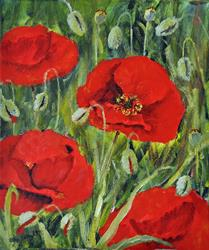 Art: Poppies (57) by Artist John Wright