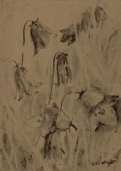 Art: Harebells (4) by Artist John Wright