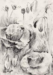 Art: Poppies (43) by Artist John Wright