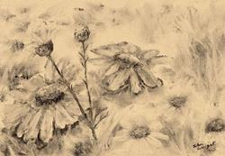 Art: Ox eye daisies (7) by Artist John Wright