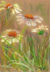 Art: Ox eye daisies (8) by Artist John Wright