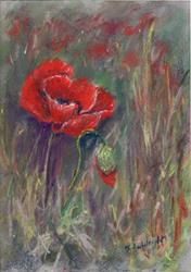 Art: Poppies by Artist John Wright