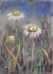 Art: Ox-eye daisies by Artist John Wright