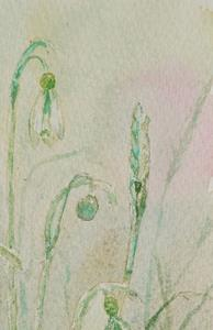 Detail Image for art Snowdrops