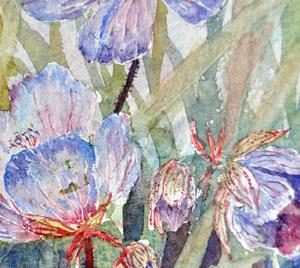 Detail Image for art Meadow cranesbill