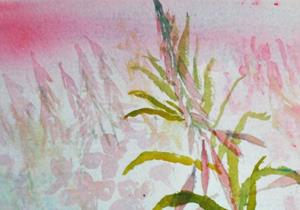 Detail Image for art Rosebay willowherb