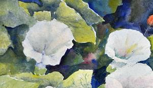 Detail Image for art Bindweed