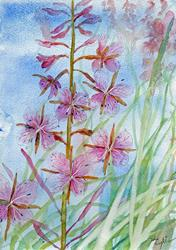 Art: Rosebay willowherb by Artist John Wright