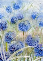 Art: Blue thimble flowers by Artist John Wright