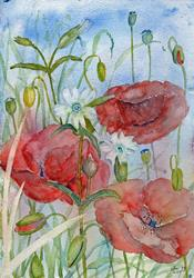 Art: Poppies and white campion by Artist John Wright