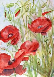 Art: Poppies (49) by Artist John Wright