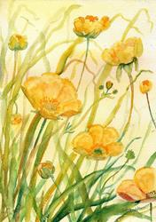 Art: Buttercups (4) by Artist John Wright