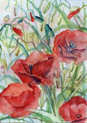 Art: Poppies (51) by Artist John Wright