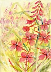 Art: Rosebay willowherb (2) by Artist John Wright