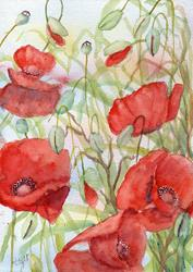 Art: Poppies (52) by Artist John Wright