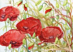 Art: Poppies (53) by Artist John Wright