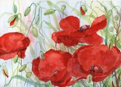 Art: Poppies (55) by Artist John Wright