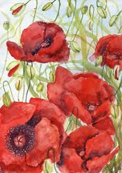 Art: Poppies (56) by Artist John Wright