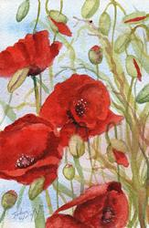 Art: Poppies (58) by Artist John Wright