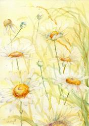 Art: Ox eye daisies (9) by Artist John Wright