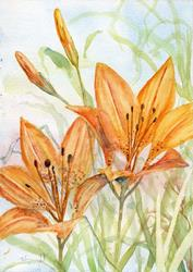 Art: Prairie Lilies (2) by Artist John Wright