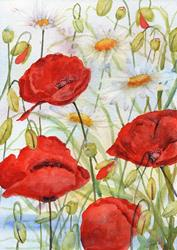 Art: Poppies and ox eye daisies (6) by Artist John Wright