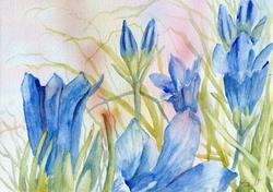Art: Marsh gentian (6) by Artist John Wright