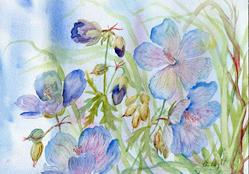 Art: Meadow Cranesbill (4) by Artist John Wright