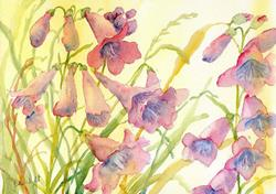 Art: Penstemons (2) by Artist John Wright