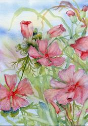 Art: Musk mallow (2) by Artist John Wright
