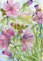 Art: Musk mallow (3) by Artist John Wright