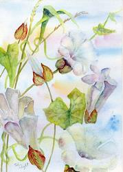 Art: Bindweed (4) by Artist John Wright