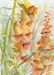 Art: Foxgloves (12) by Artist John Wright