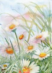 Art: Daisies (6) by Artist John Wright