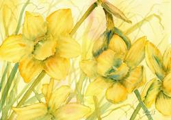 Art: Daffodils (22) by Artist John Wright