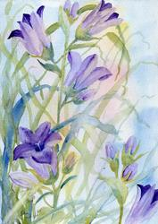 Art: Nettle leaved bellflower (2) by Artist John Wright