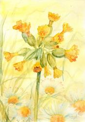 Art: Cowslips and daisies by Artist John Wright