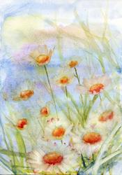 Art: Daisies (8) by Artist John Wright